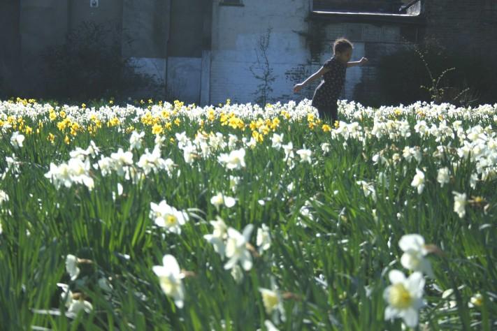 Lydia in daffodils