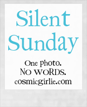Silent-Sunday-2